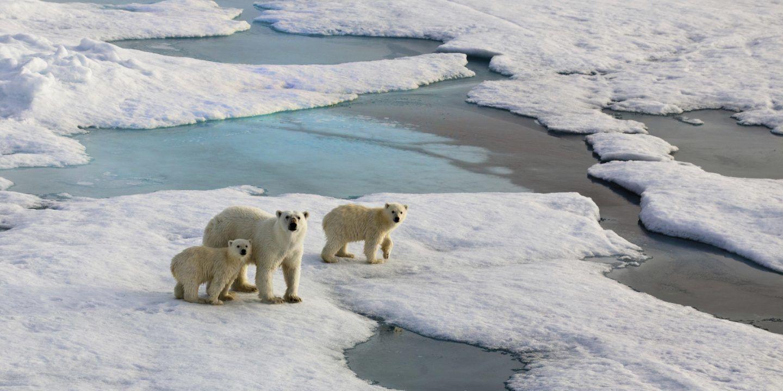 بيانات و خرائط توضح كيف تعرض التغيرات المناخية القطب الشمالي للخطر الموقف خطير !