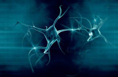 لأول مرة: تصوير فيديو لكيفية تخلص الدماغ من الخلايا العصبية التالفة - الدماغ به نظام للتخلص من الفضلات يبعد الخلايا العصبية التالفة