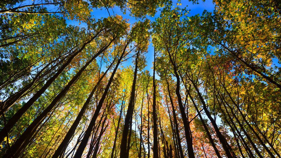 خمسة أشياء لم تكن تعلمها عن الاعتدال الخريفي