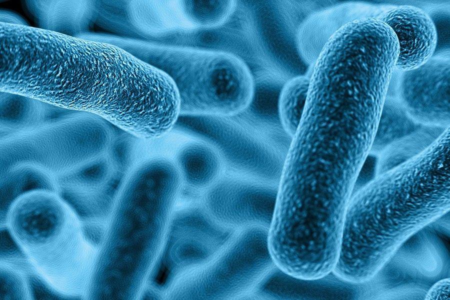 كيف تتغذى البكتيريا آكلة اللحم على لحمك ؟