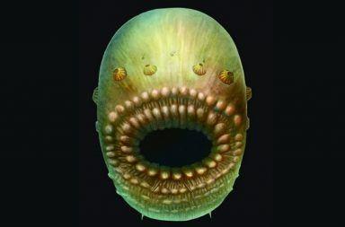 الحبليات ما هي ثانويات الفم أنواع ثانويات الفم عملية التكوين الجنيني الفقاريات حبليات الرأس حبليات الذيل شوكيات الجلد الحيوانات ثدييات بحرية لا فقارية