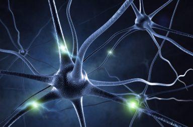 دراسة جديدة: يُفَعِّل دماغك شبكات عصبية جديدة عند البلوغ - يُظهر الدماغ شبكات جديدة في فترة المراهقة - التغير في القدرات العقلية - وظائف الدماغ