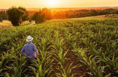 ما هي الزراعة العضويةوما الفرق بين الزراعة العضوية وغير العضوية المحاصيل الأسمدة البيولوجية المبيدات الحشرية النفايات الحيوانية النفايات النباتية