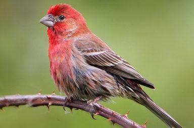 القدرة على استشعار الحقل المغناطيسي - حاسة لدى الطيور تسمح لهم برؤية الحقل المغناطيسي للأرض بواسطة حيلة ذكية تعتمد على فيزياء الكم والكيمياء الحيوية