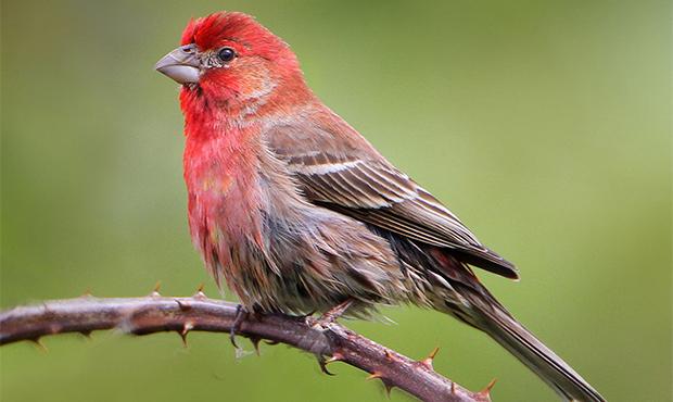 العلماء يلاحظون الحاسة الكمومية للطيور