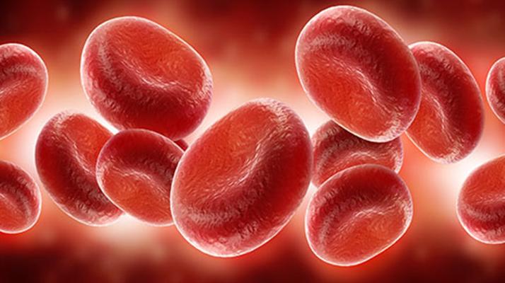 كيمياء الدم البشري: لون الدم، طعمه، وفصائله المختلفة