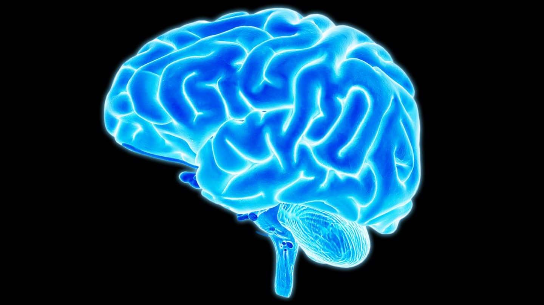 لماذا تكون الأدمغة الأكبر حجمًا أكثر عرضة للإصابة بالأمراض العقلية؟