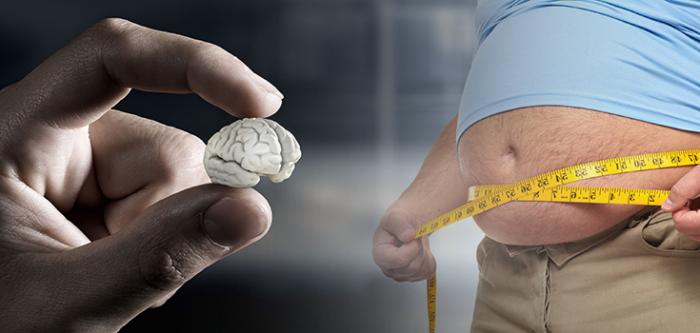 هناك رابط بين دهون البطن و حجم الدماغ