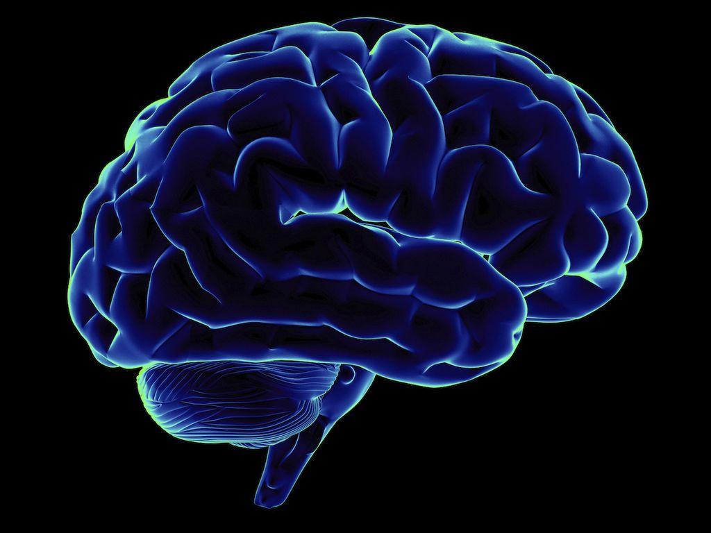 هل يؤثر شكل الدماغ على السمات الشخصية ؟