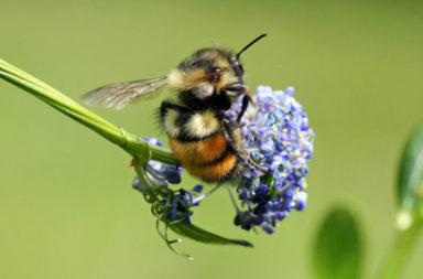النحل البري يلقح الأزهار ويوفر المليارات - المناطق ذات الزراعة المكثفة - أبحاث النحل الدولية - تربية النحل - النحل البري - دور التلقيح في إنتاج المحاصيل