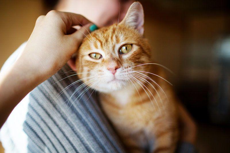 داء خدش القطط: الأسباب والأعراض والتشخيص والعلاج