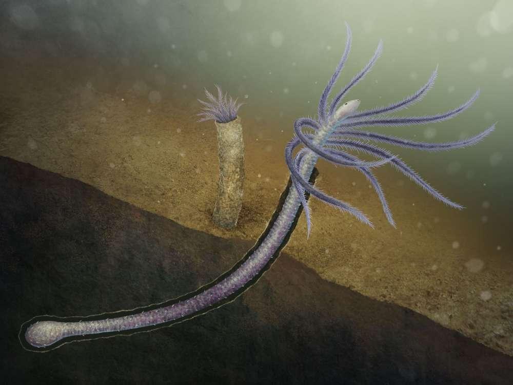 أقدم دليل أحفوري على كائن فقد أطرافه خلال عملية التطور - أقدم دليل على وجود حيوان كان يملك أطرافًا - الحياة المعقدة متعددة الخلايا
