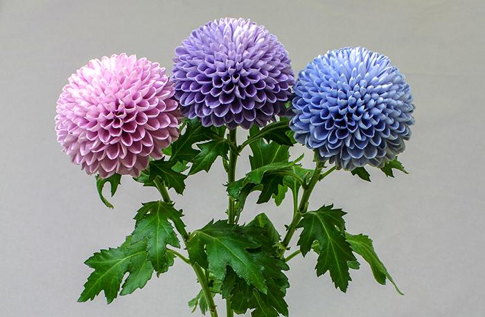 الزهور في جميع أنحاء العالم تغير لونها بسبب تغير المناخ!