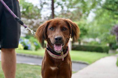 ما الطريقة الصحيحة للخروج والتنزه مع كلبك - أسلوب الاعتناء بالكلب وسنقدم نصائح للتربية الصحيحة - كيف أتنزه مع كلبي - المشي مع الكلب