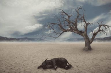 ما هي أسباب الانقراض الانقراض الجماعي الكبير الانقراضات التي مرت بها الأرض النيزك الذي أدى إلى انقراض الديناصورات التغيرات المناخية