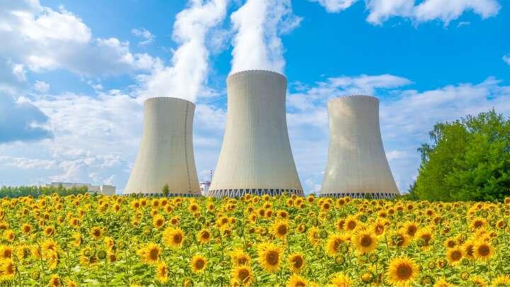 لماذا يزرع نبات عباد الشمس بعد الكوارث النووية؟