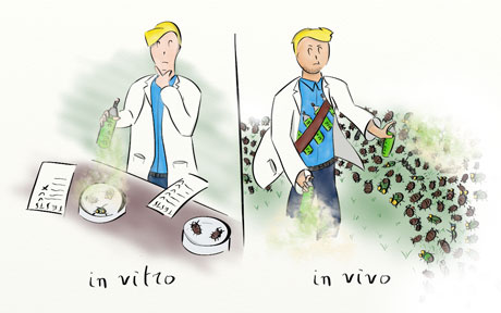 ما الفرق بين التجارب التي تجرى في المختبر وتلك التي تجرى على الكائنات الحية - التجارب الطبية بعيدًا عن الأجسام الحية - الاختبارات المُجراة في المختبر