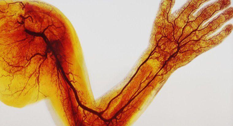 أوعية دموية لم تكتشف سابقا ربما توجد في عظام البشر
