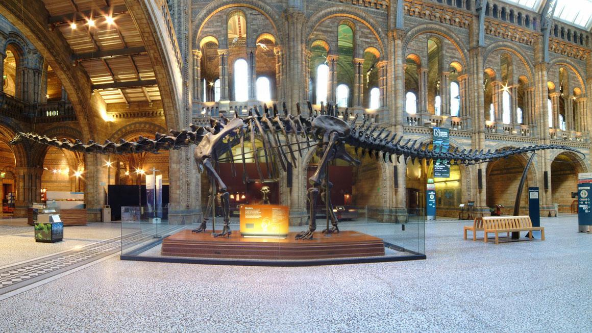 أضخم الديناصورات على الأرض كانت تضع بيض صغير، لماذا؟