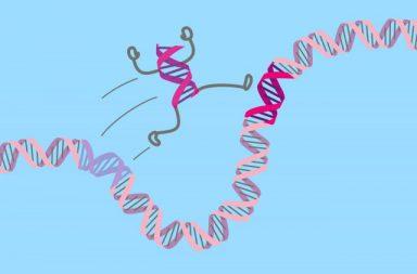 فرضية جديدة في نظرية التطور تشرح لماذا تتحرك الجينات على الكروموسومات - اكتشاف الحمض النّووي وكيفية تضاعفه - الطفرات في الحمض النووي