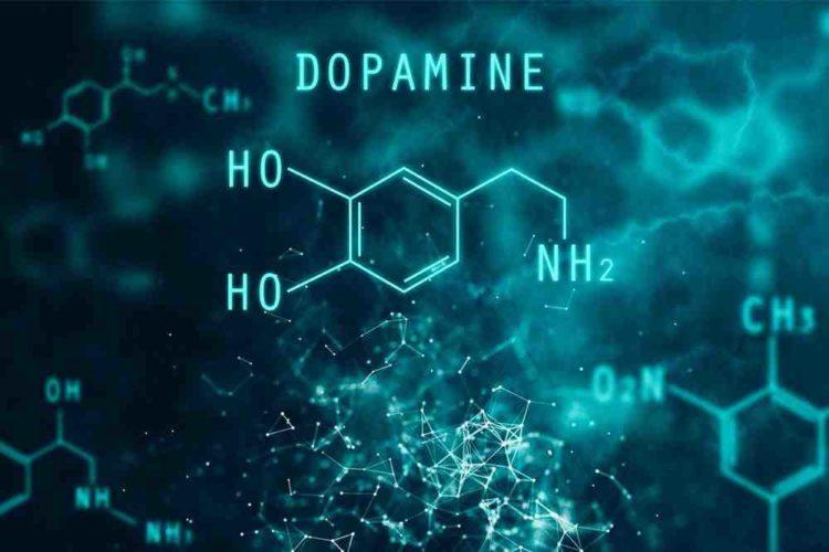 الدوبامين Dopamine الاستخدامات والجرعة والآثار الجانبية والتحذيرات أنا أصدق العلم
