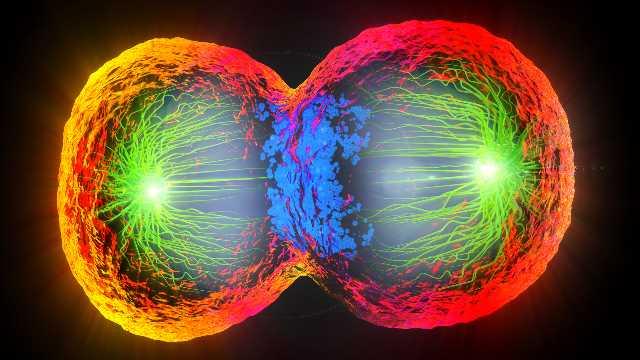 الانقسام الخلوي - انقسام الخلية