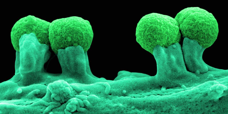 يخلق العلماء بكتيريا بشيفرة جينية من ستة احرف