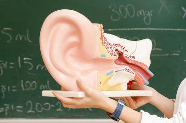 وجد الباحثون بروتينات تساعد على استعادة الخلايا المستشعرة للصوت في الأذن الخلايا المشعرة Hair cell استعادة السمع لدى الأشخاص الذين يعانون من الصمم