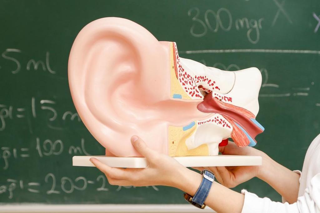 وجد الباحثون بروتينات تساعد على استعادة الخلايا المستشعرة للصوت في الأذن