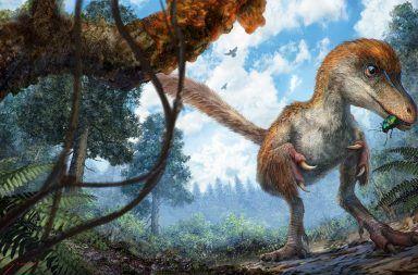 تطور الريش قبل ملايين السنين من ظهور الطيور أو حتى الديناصورات التيروصورات الزغب دراسة الحفريات في الصين سلف مشترك العصر الترياسي المبكر