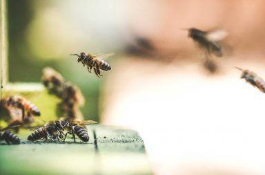 هل يمكن للنحل ربط الرموز المجردة بالأرقام النحل قادر على فهم الرياضيات المجردة قدرة النحل على حل المسائل الرياضية ذكاء النحلة