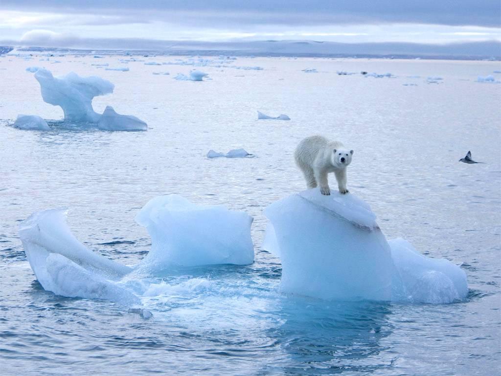 قريبًا سيصبح القطب الشمالي خاليًا من الجليد في الصيف