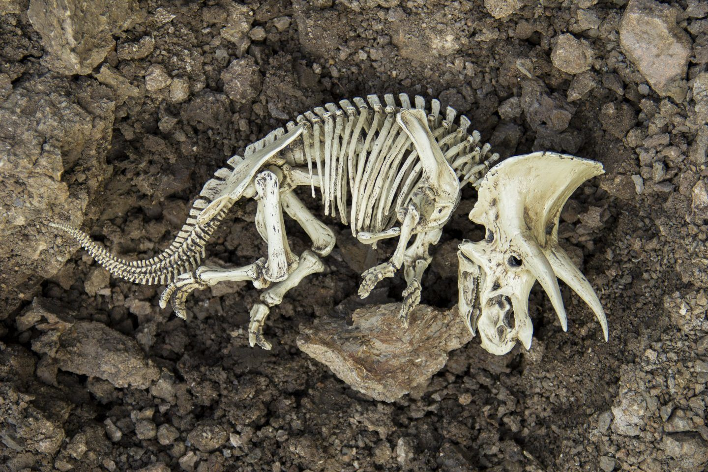 كيف يحدث الانقراض ؟