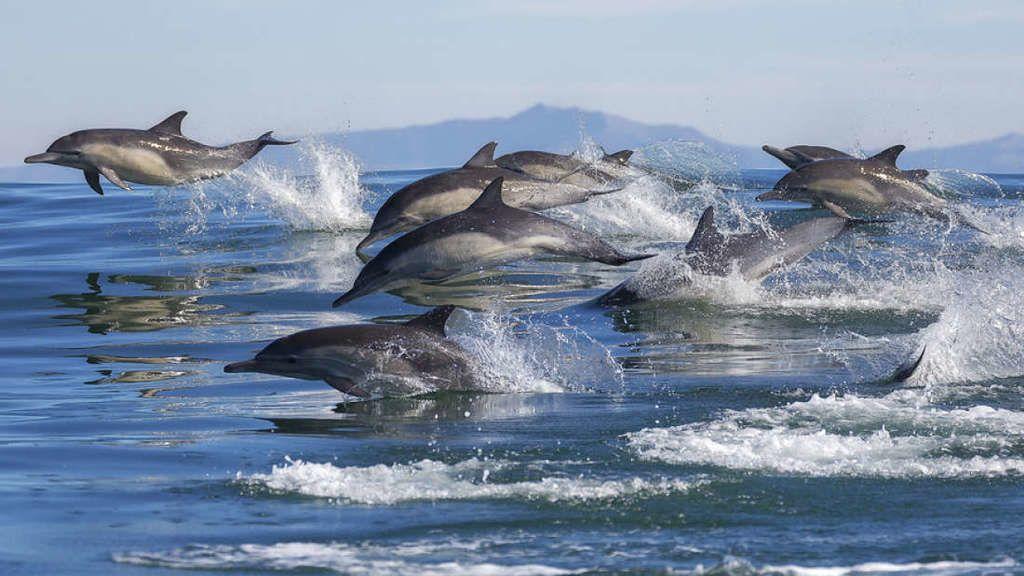 الدلافين تظهر علامات إدراك الذات أسرع من أطفال البشر