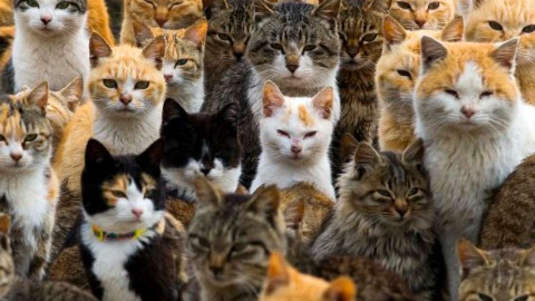 سبعة أشياء تقوم بها تجعل القطط تكرهك سرًا