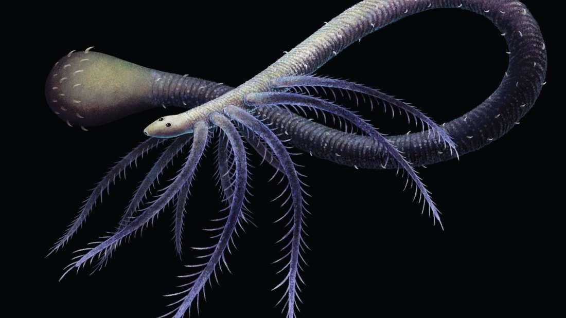أقدم دليل أحفوري على كائن فقد أطرافه خلال عملية التطور
