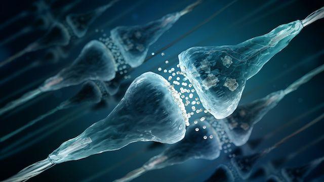 العلماء ينتجون خلايا دماغية منتجة للنخاعين ( الميالين )
