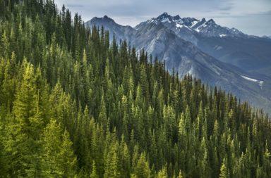 غير البشر نحو خمس مساحة الأرض في غضون 60 سنة فقط - ما هي التغييرات التي طرأت على مساحة الأرض منذ 60 سنة - استخدام الأراضي للزراعة