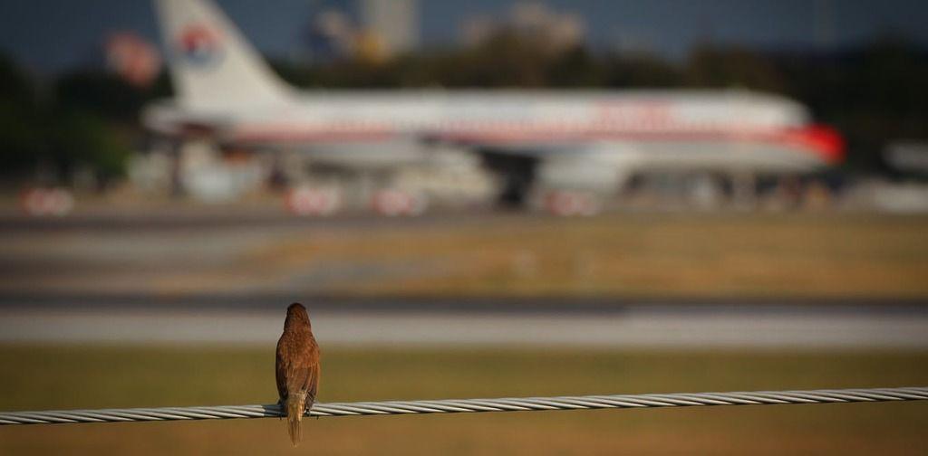 ماذا يحدث عند اصطدام الطيور بالطائرات؟