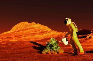 هل يمكن زراعة النباتات على كوكب المريخ استصلاح تربة المريخ الكوكب الأحمر استيطان الكوكب الأحمر الحياة خارج الأرض استكشاف لفضاء