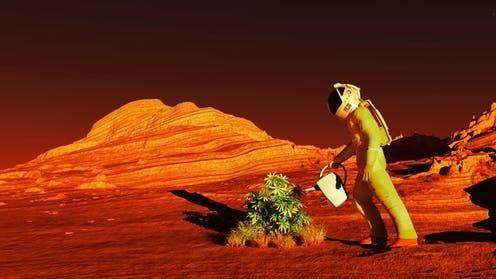 هل يمكن زراعة النباتات على كوكب المريخ ؟