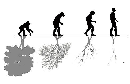 التكيف المناخي و التطور