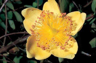 ما هو المتاع أو المدقة المحيط الذي يضم أعضاء التأنيث في الزهرة الجزء المركزي أو الأعلى من الزهرة تتكوت المدقة من الكرابل المبيض البويضات