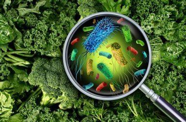 السموم المتشكلة والبكتريا الغازية (الغزوية أو المغيرة) أو المنتجة للسموم والفيروسات والطفيليات والمعادن الثقيلة كالرصاص التي تسببها الأمراض المنقولة بالغذاء