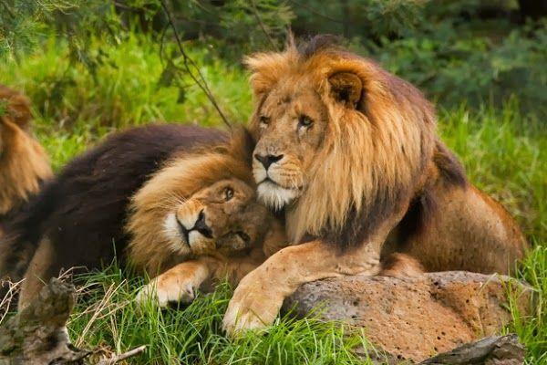 المثلية الجنسية عند الحيوانات