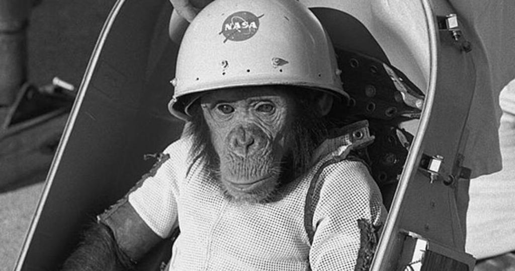 """""""هام"""" الشيمبانزي، بطل من أبطال الفضاء"""