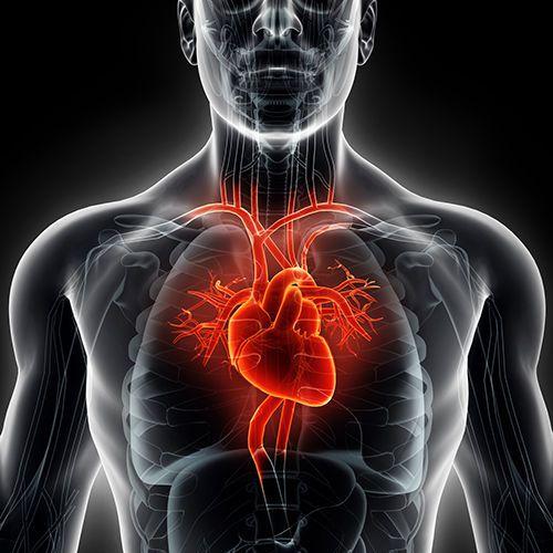 قصور القلب: الاسباب والأعراض والتشخيص والعلاج