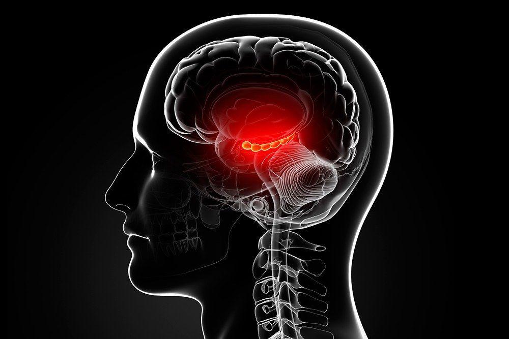 الحصين : ما هو الحصين وما أهميته في الذاكرة والتعلم والأمور الأخرى؟