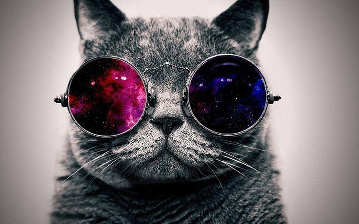 إنقاذ قطة شرودنجر!