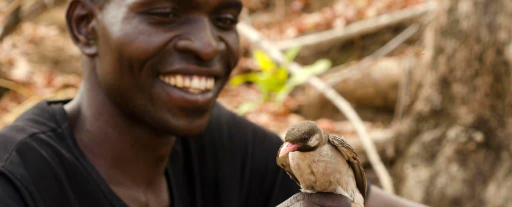 للمرة الأولى علماء يوثقون طيورًا برية تتحدث مع البشر!